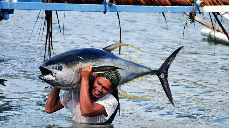 Murky waters of safe seafood consumption retiring to the for Is tuna fish good for you